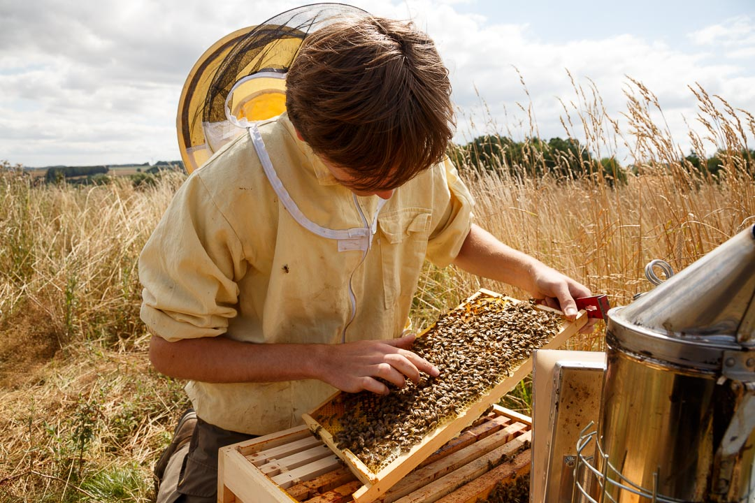 Der Imker Martin Kleine beim bearbeiten eines Bienenvolkes